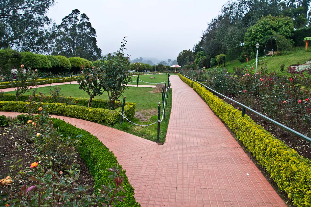 Path in Rose garden Ooty