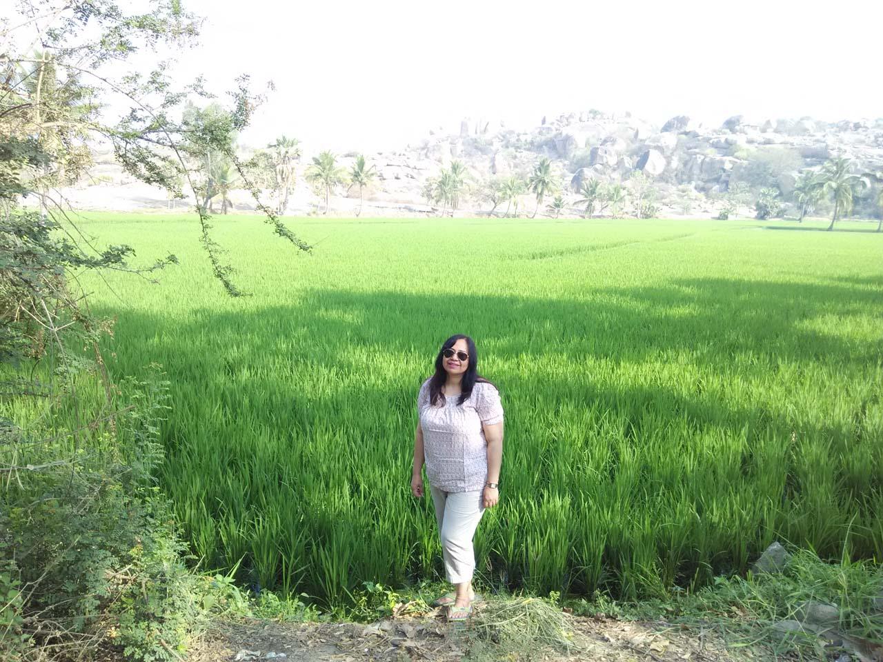 Rice farm hampi village