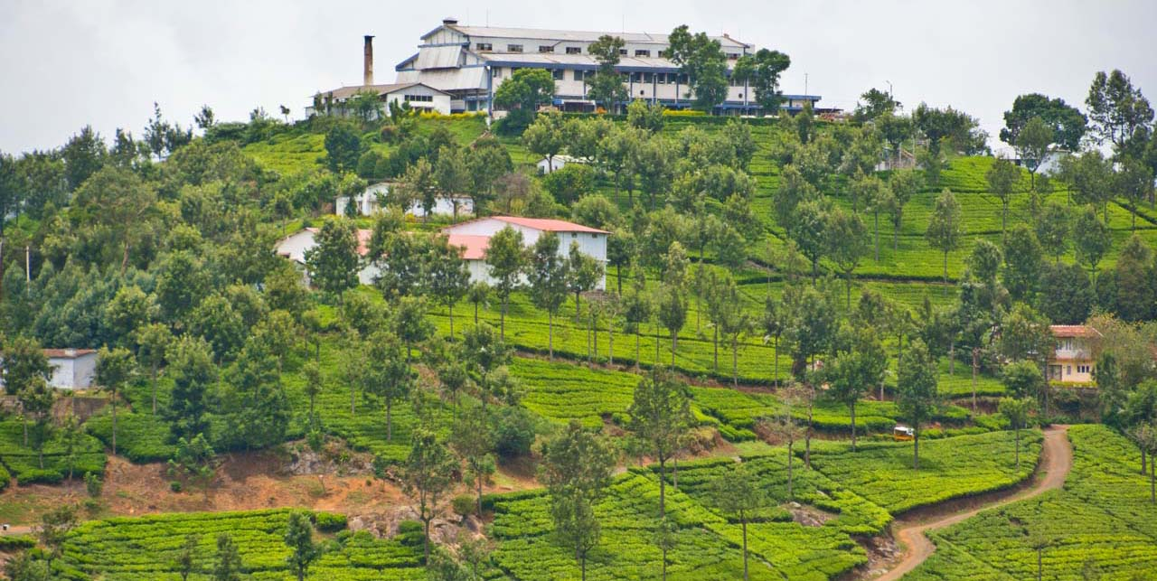 Ooty and Coonoor - A Weekend Trip in Monsoon
