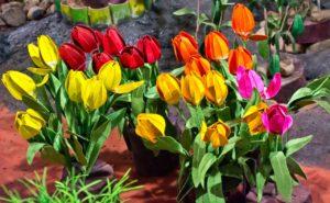 Flowers in Thread Needle museum Ooty