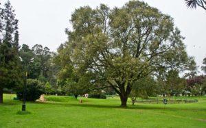 Grounds of Botanical garden Ooty