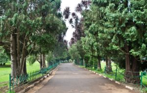 Pathways in Botanical garden Ooty