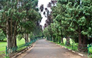 Pathways in Botanical garden Ooty
