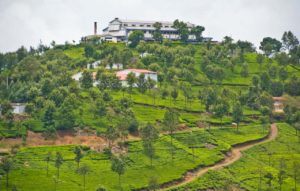 Tea gardens and factory coonoor