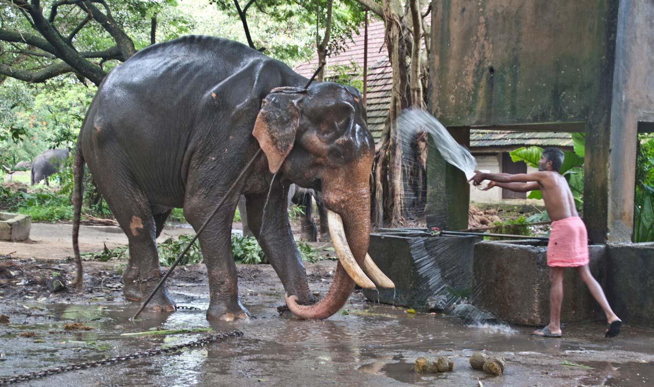 Elephant Camp Guruvayur