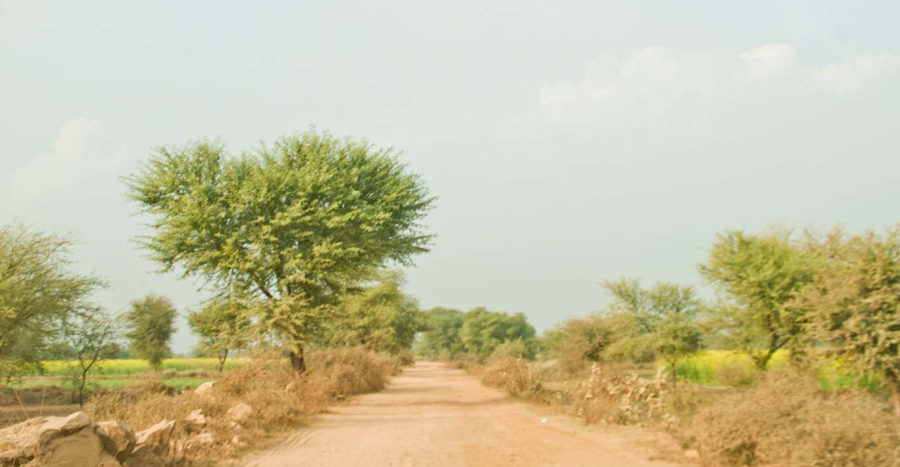 Dirt road on the way to Bhangarh fort