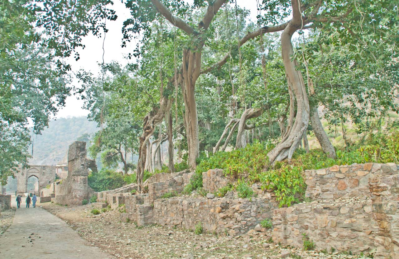 Trees in Bhangarh fort