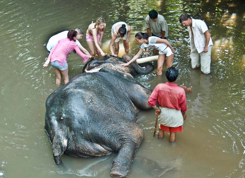 Elephant Bath in Spice Garden Goa