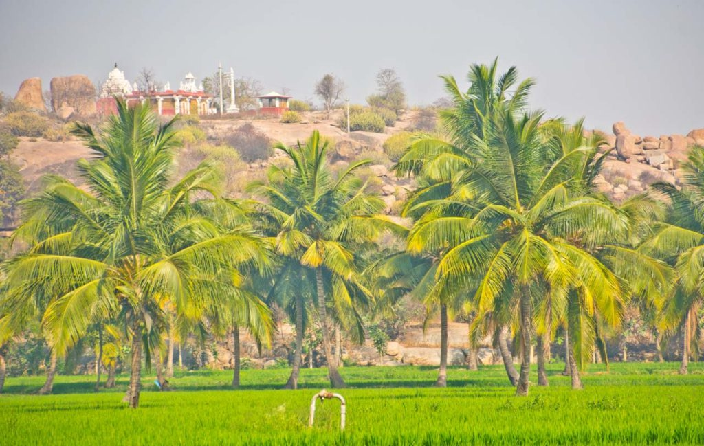 Paddy field in Hippie Island Hampi