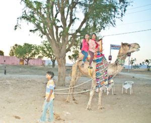 Camel ride Pushkar