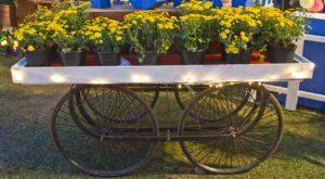 Palate fest flowers