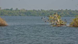 Birds in Kerala Backwaters from Alleppy to Kollam