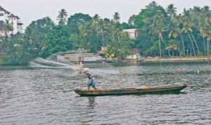 Fisherman with net in the Kerala Backwaters