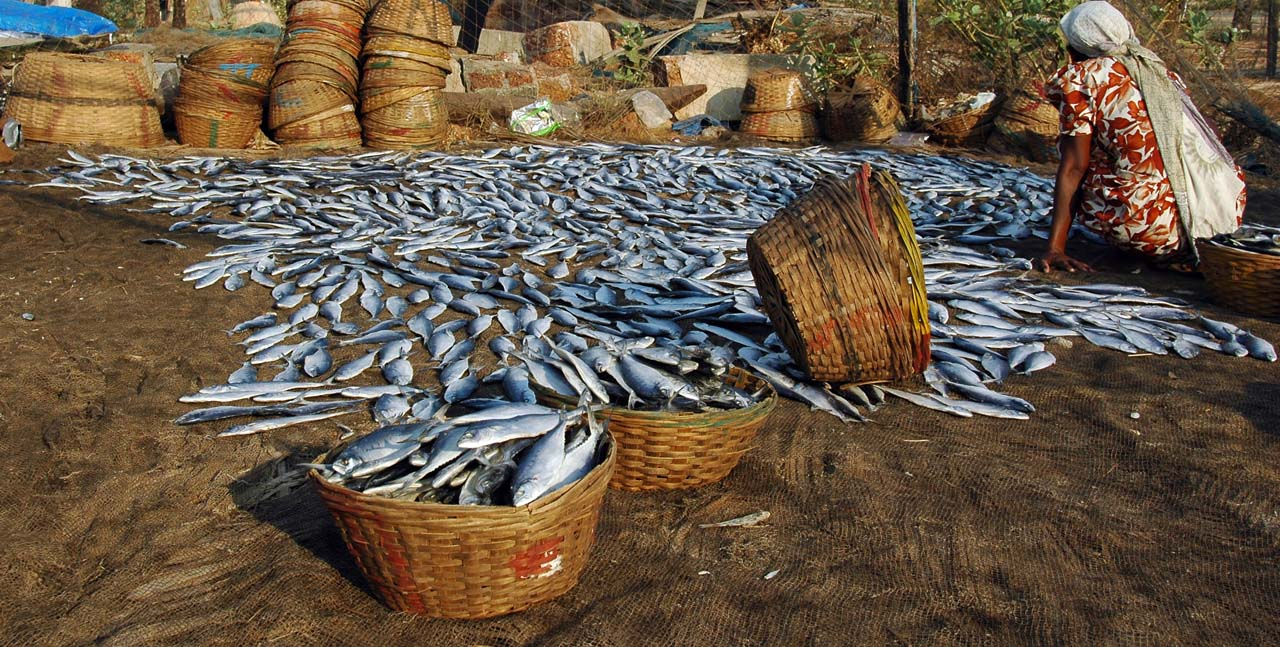 Fishes in Goan Market