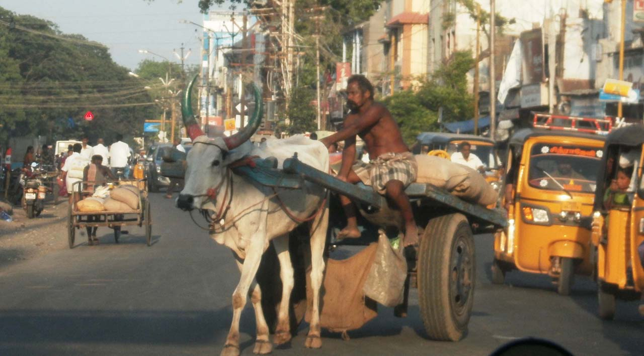Bullock cart on the way from Tirupur to Madurai
