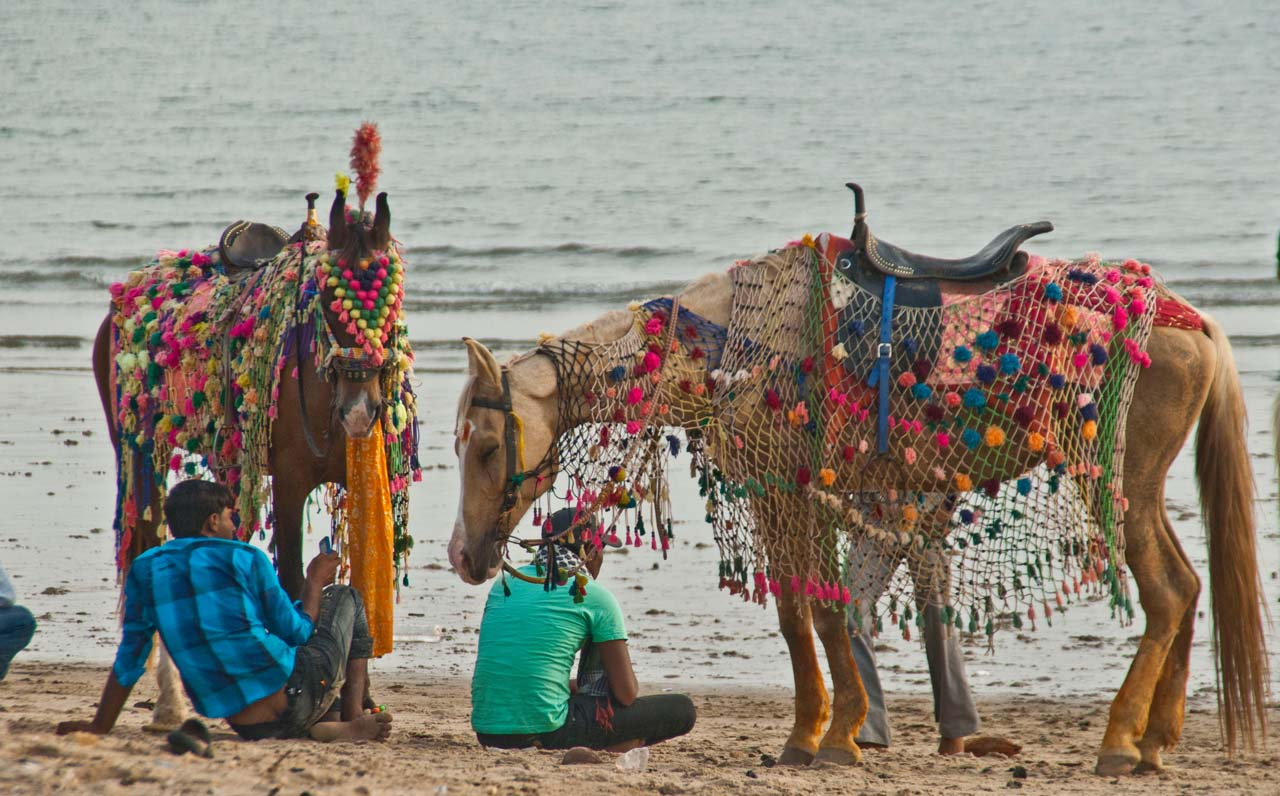 Horse at Mandvi Beach