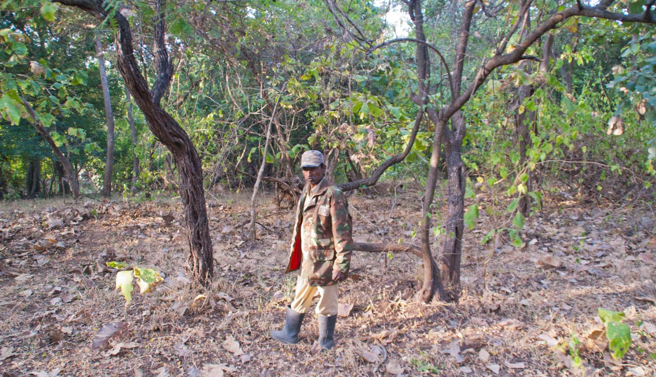 Forest guard in Gir national park