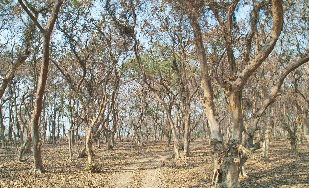 Dirt trak in Pobitora wildlife sanctuary