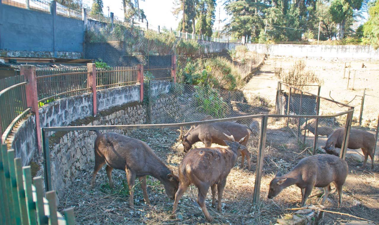 Zoo in Park Shillong