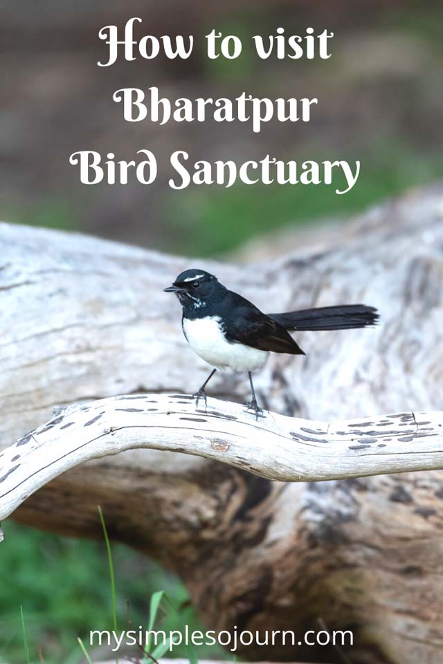 Delhi to Bharatpur Bird Sanctuary and Exploring Keoladeo National Park #Bharatpurbirdsancturay #Keoladeonationalpark #Rajastha #Incredibleindia #Birds #Nationalpark #Birdsanctuary