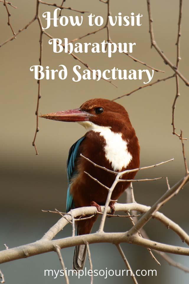Delhi to Bharatpur Bird Sanctuary and Exploring Keoladeo National Park #Bharatpurbirdsancturay #Keoladeonationalpark #Rajastha #Incredibleindia #Birds #Nationalpark #Birdsanctuary