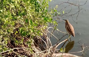 Bird in Bharatpur bird sanctuary