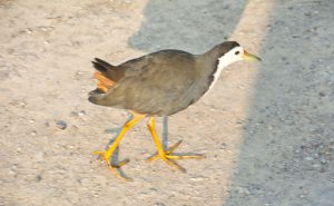 Bird in Bharatpur bird sanctuary