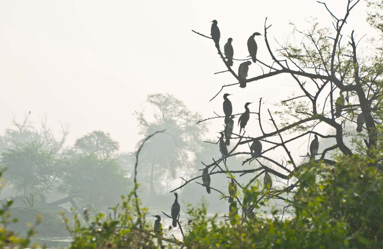 Birds in Bharatpur bird sanctuary
