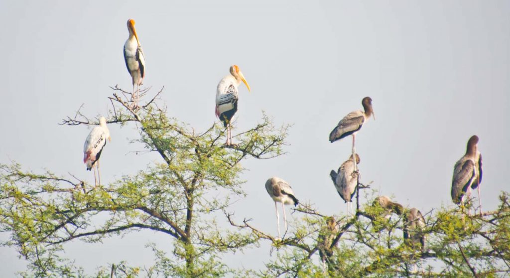Delhi to Bharatpur Bird Sanctuary and Exploring Keoladeo National Park