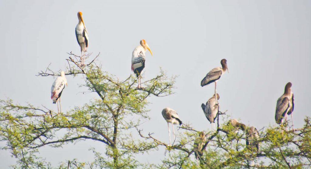 Delhi to Bharatpur Bird Sanctuary and Exploring Keoladeo National Park