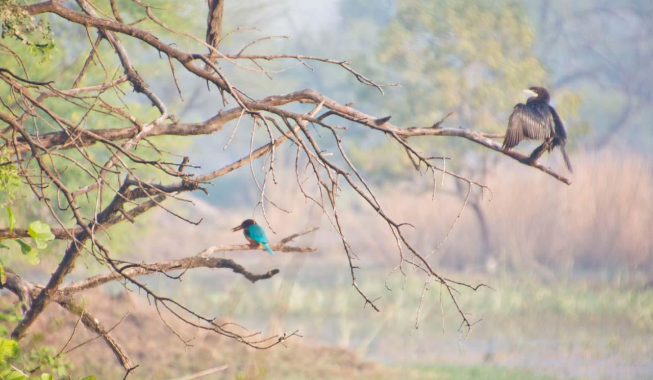 Birds in Bharatpur bird sanctuary Rajasthan