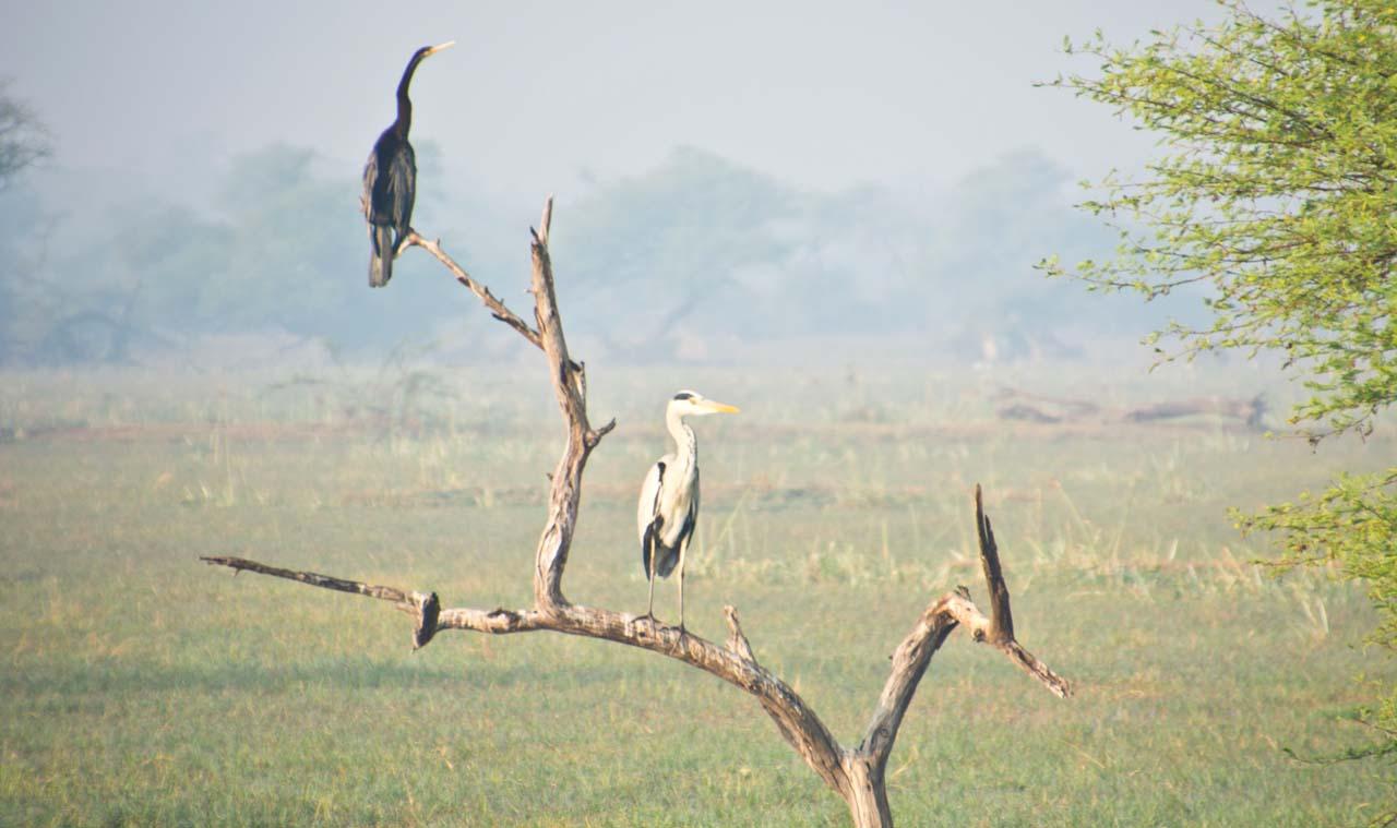 Birds in Keoladeo national park