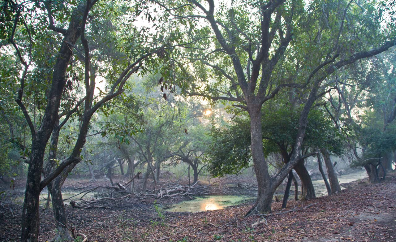 Jungle area of Bharatpur bird sanctuary