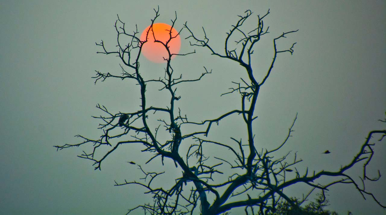Sunset in Bharatpur bird sanctuary
